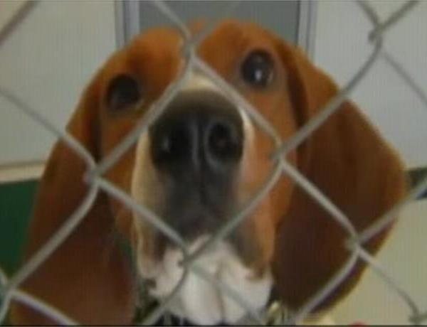 Evansville Animal Shelters At Capacity_-1538086948778980641