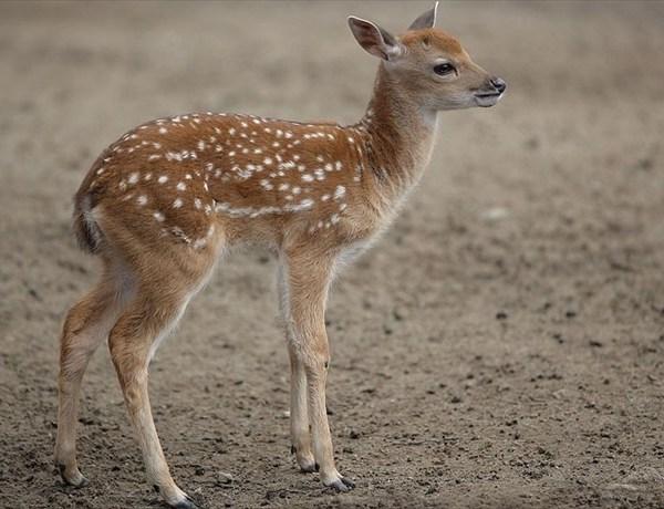 Deer Terror_-4306503570858422716