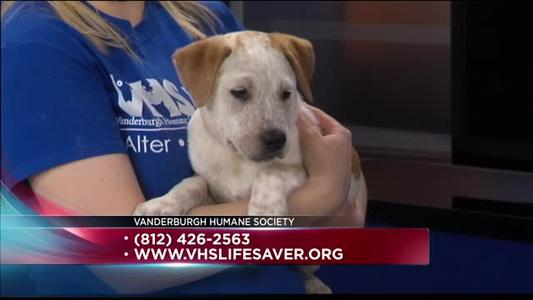 Pet of the Day - 6_22_15_9172838768857925683