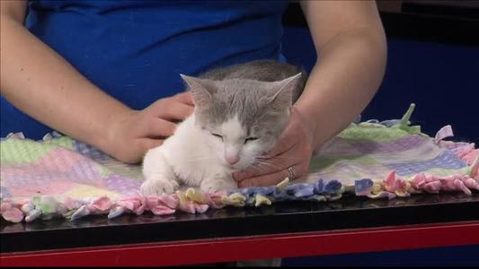 Pet of the Day - 6_19_15_7410977927537969763