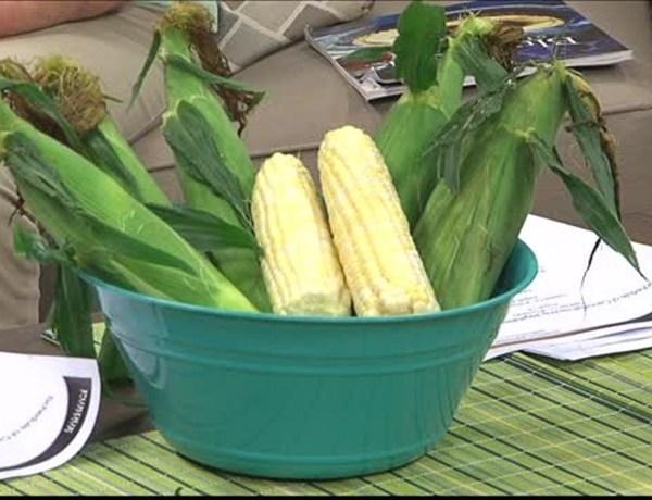 corn_-2757954545493324552