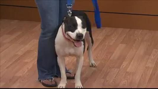 Pet of the Day - 6_25_15_-6769651563002246995