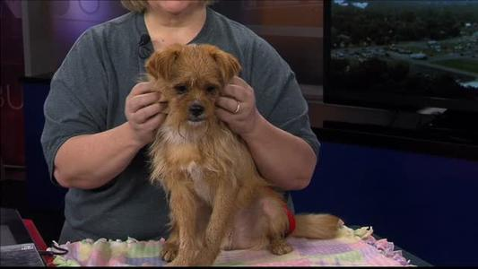 Pet of the Day - 7_1_15_7352848071294274742