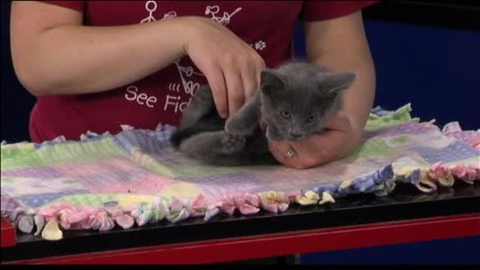 Pet of the Day - 6_29_15_-4444555922907708059