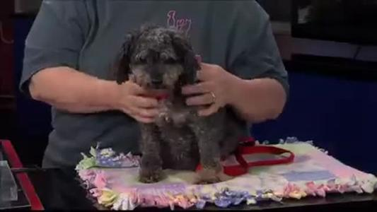 Pet of the Day - 6_24_15_8330611385245321888