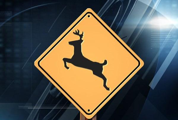Deer Crossing Web