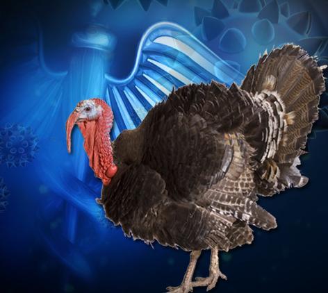 BIRD FLU_1452992203400.jpg