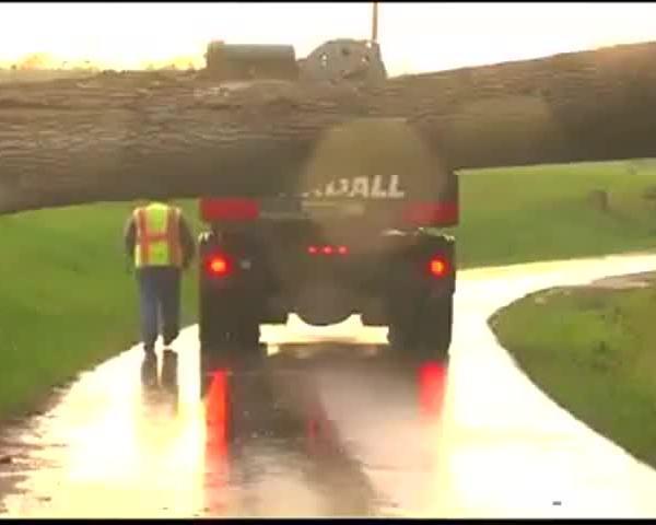 Fallen Tree Causes Gas Leak_66184029-159532