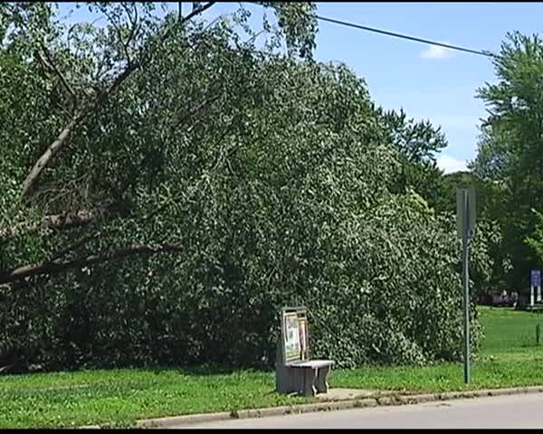 Sunday Storm Uproots Tree at State Hospital_76019760-159532