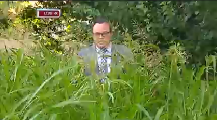 jv in the weeds_1467248785698.png