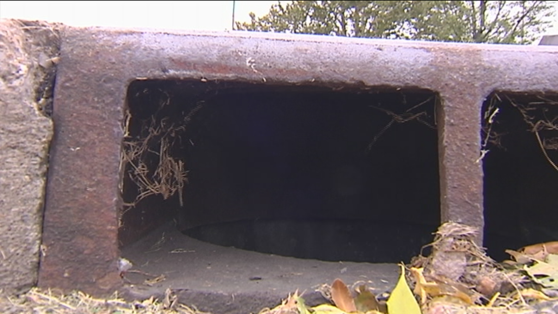 sewer rat remediation 4_1476395007887.jpg