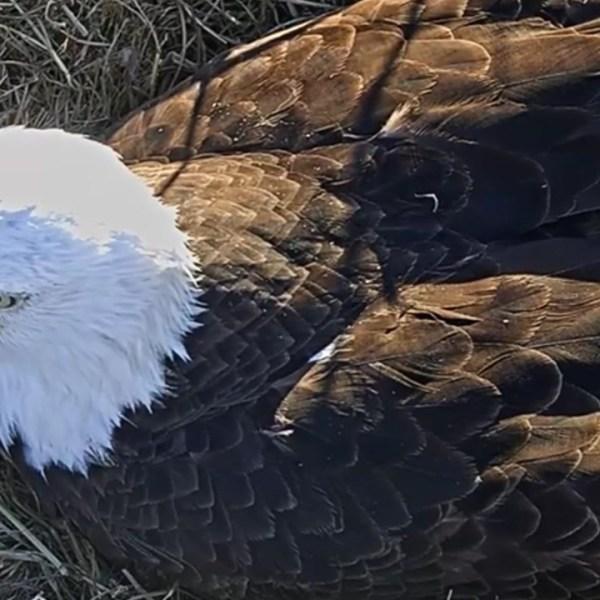 eagle watch_1483147865457.jpg