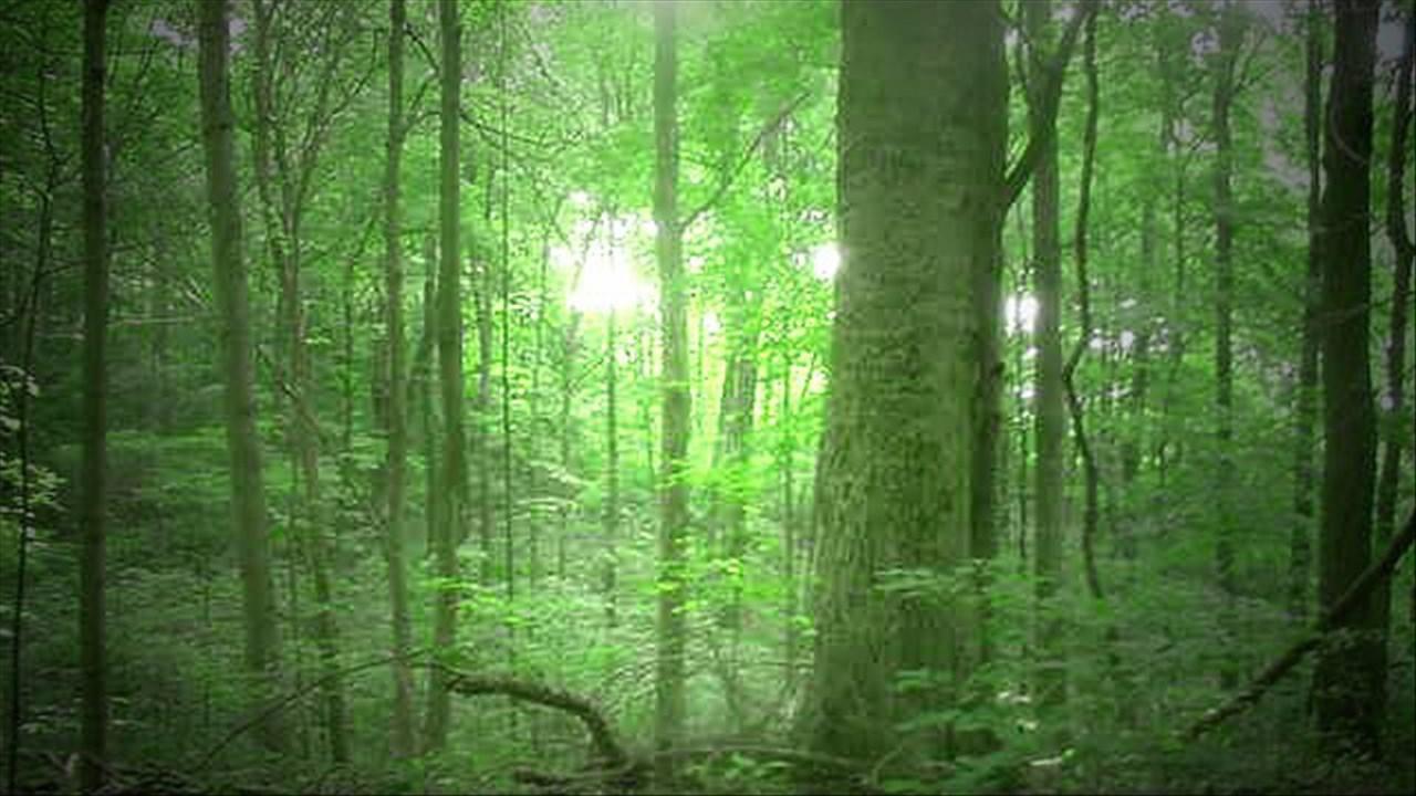 forestry_1481911343330.jpg