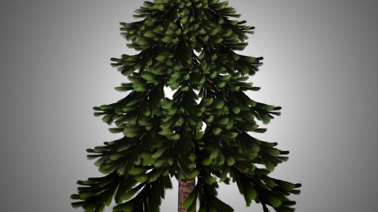 pine_1482788858680.jpg