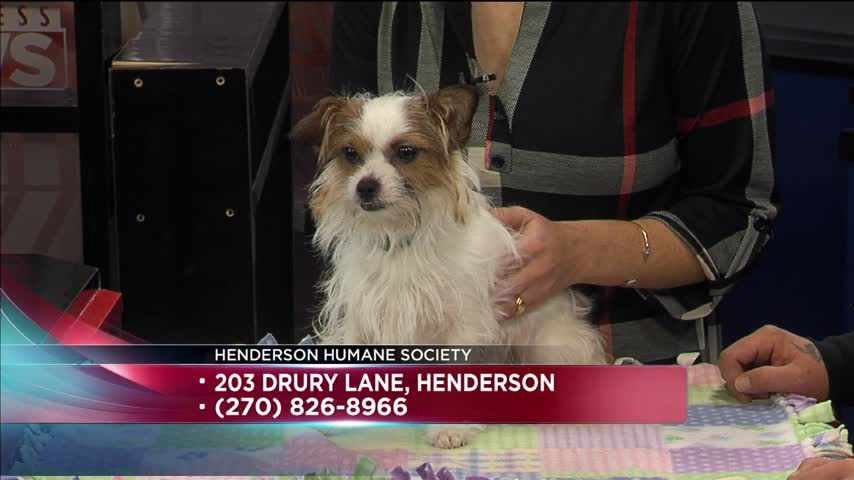 pluto pet of the day_24104162