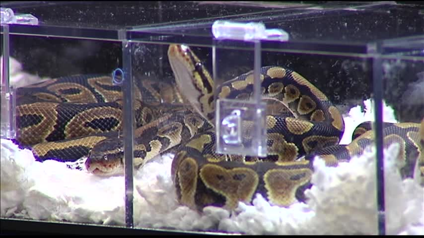 Reptile Expo Comes to Evansville_24654907