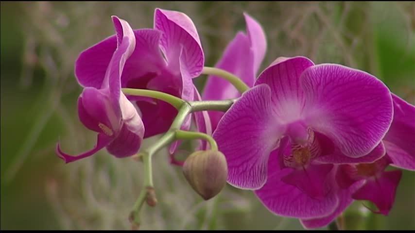 Mesker Park Zoo Orchid Escape