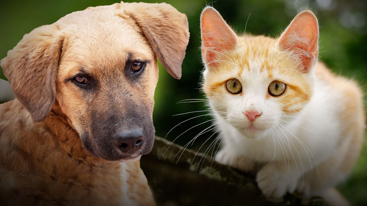 dog and cat_1488477135589.jpg
