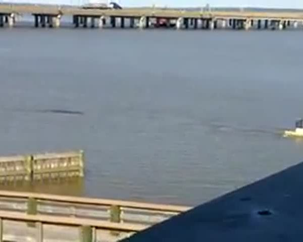 Kayaker Tries to Outpaddle Gator_63216881