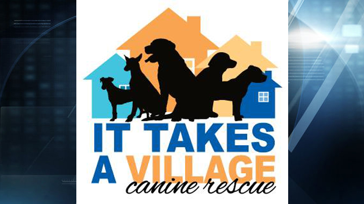 it takes a village canine rescue web_1496952512918.jpg