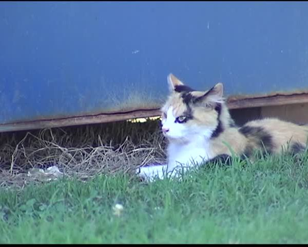 Henderson County Hoping for Grant to Deal with Feral Cats_46747731