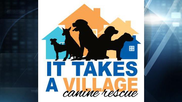 it takes a village canine rescue web_1496952512918.jpg