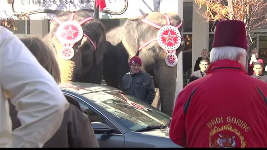 Circus Elephants on Main Street