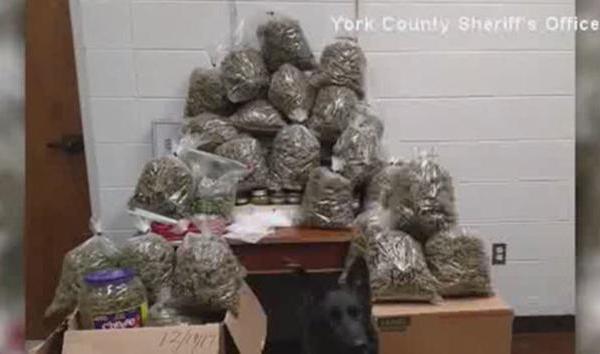 york county sheriff's office marijuana presents web_1513977030043.jpg.jpg