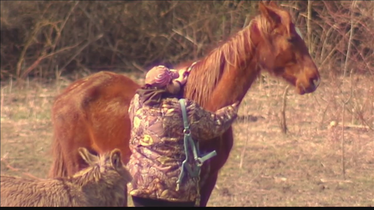 Horses_rescued_from_Gibson_Co__farm_0_20180321220753