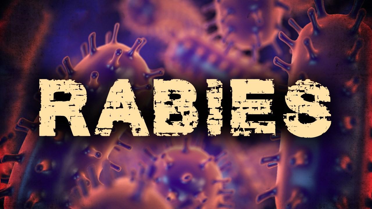 Rabies_1527795795689.jpg