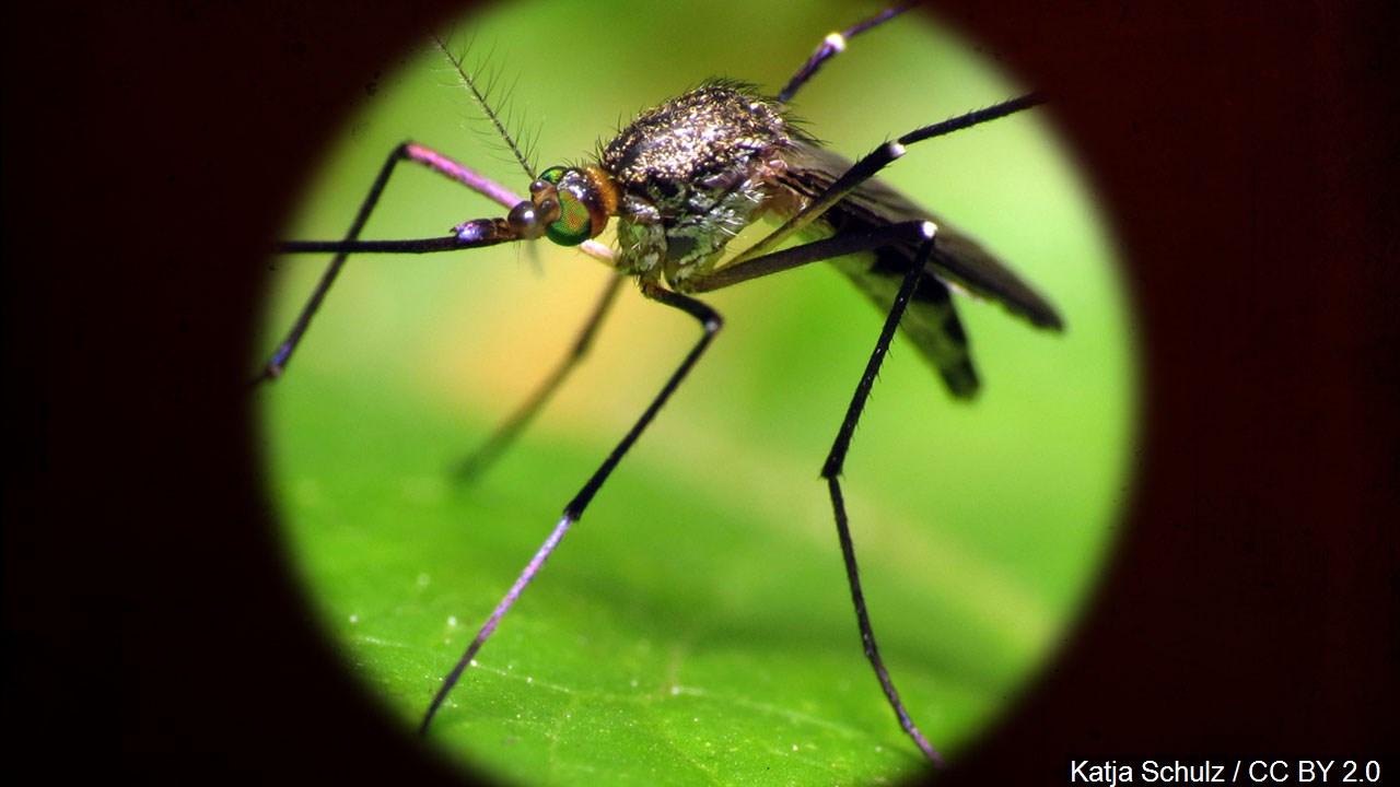 mosquito generic mgn_1533762014657.jpg.jpg