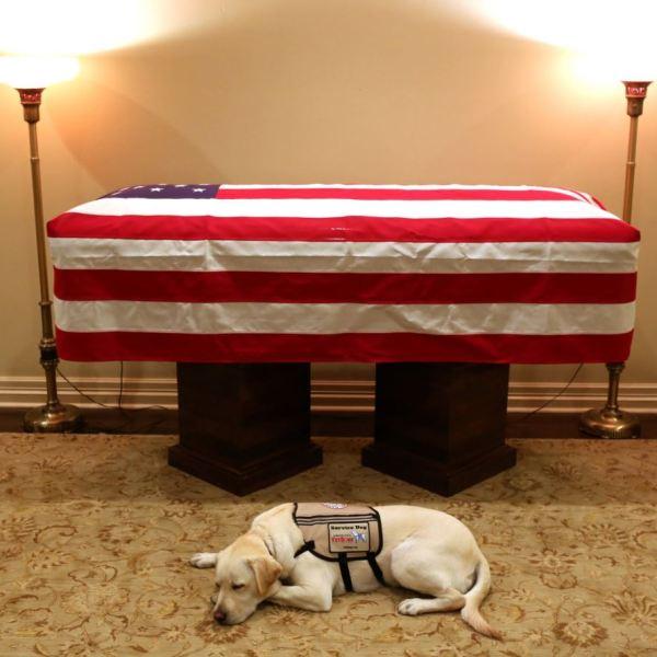 president bush dog_1543850394861.JPG.jpg