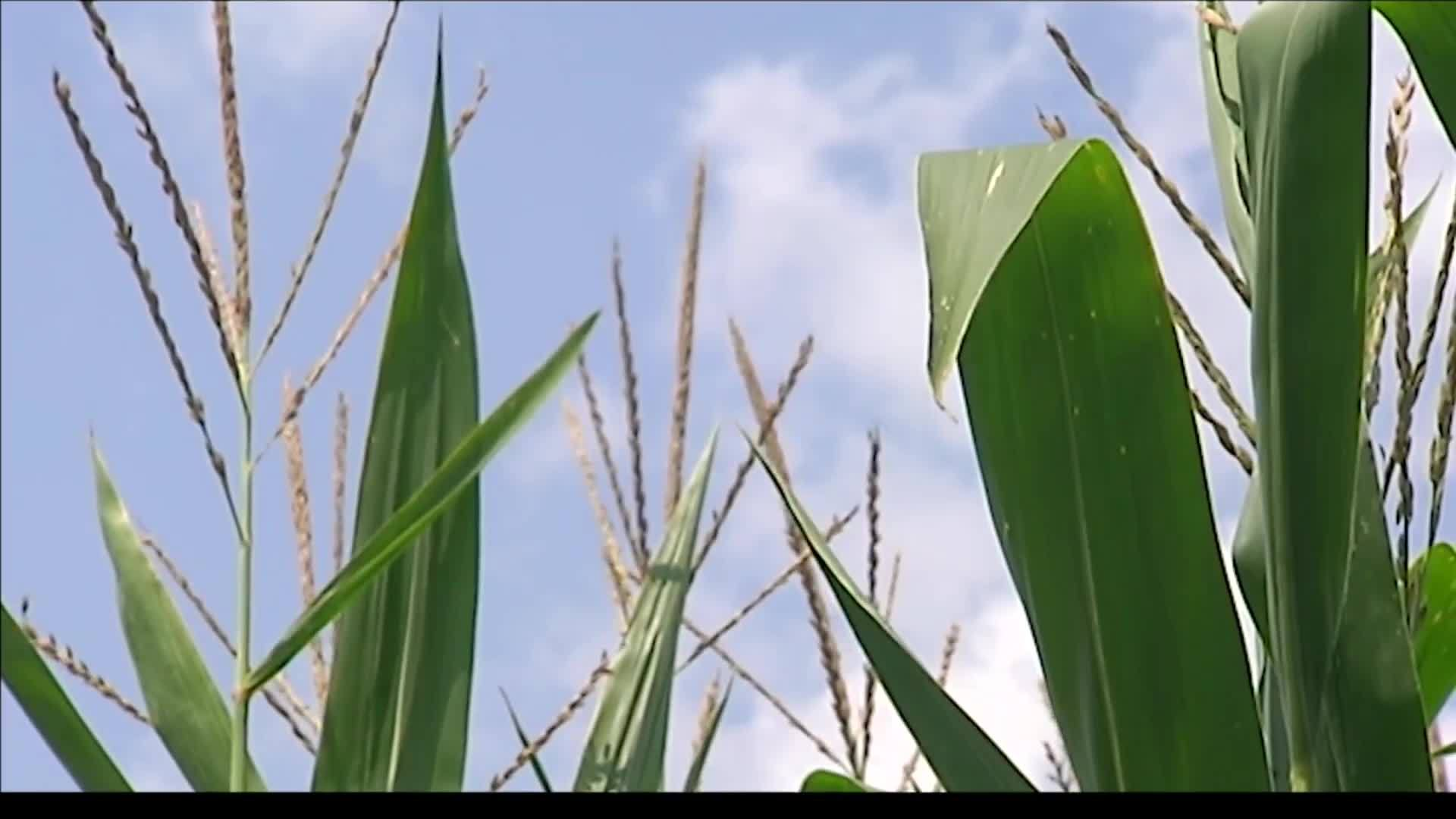 Persistent_rainfall_put_Indiana_farmers__7_20190514222206