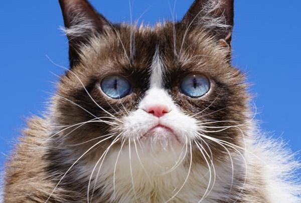 grumpy cat FOR WEB_1558092573500.jpg.jpg