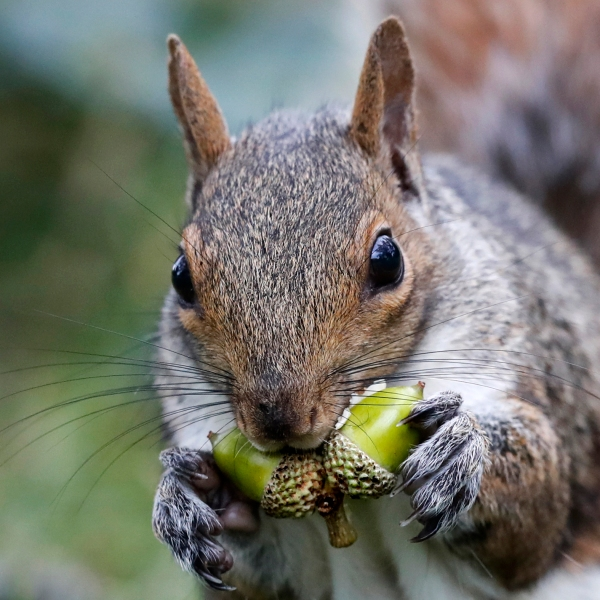 Squirrels_vs_Farmers_08475-159532.jpg58737440