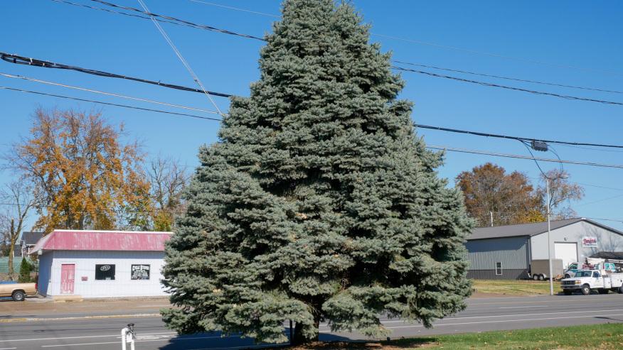 Evansville tree 2020