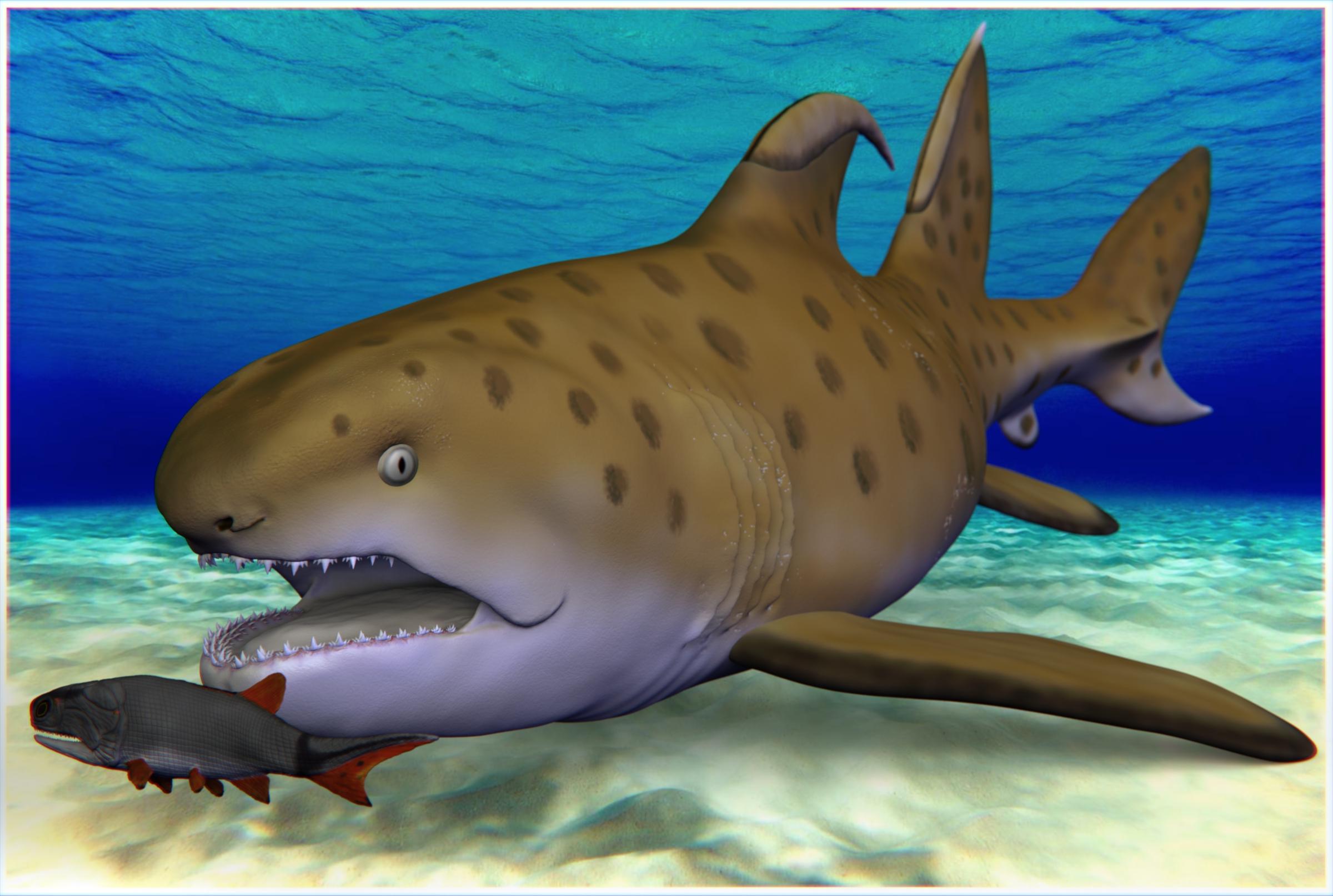 Sharks in darmstadt