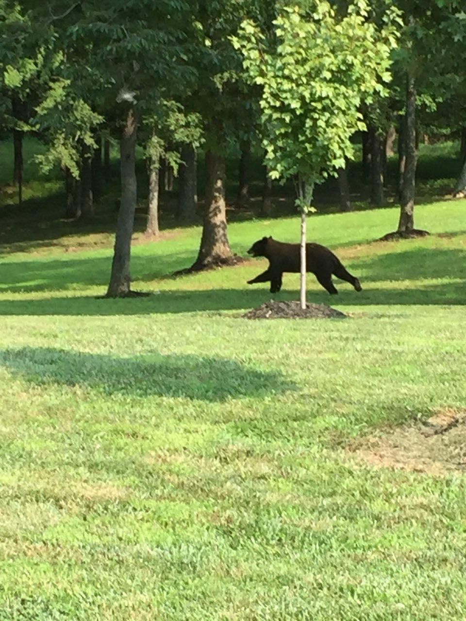 Bear sighting in Dixon, KY